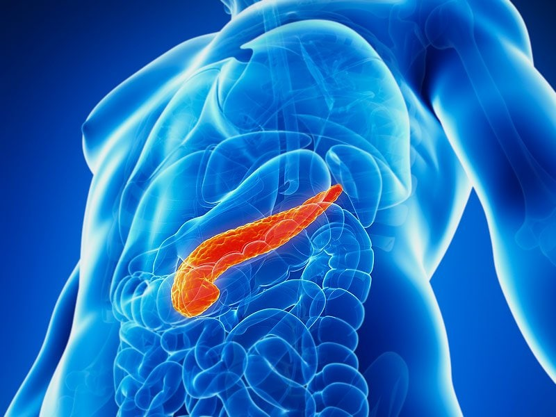 What Does The Pancreas Do In Your Body