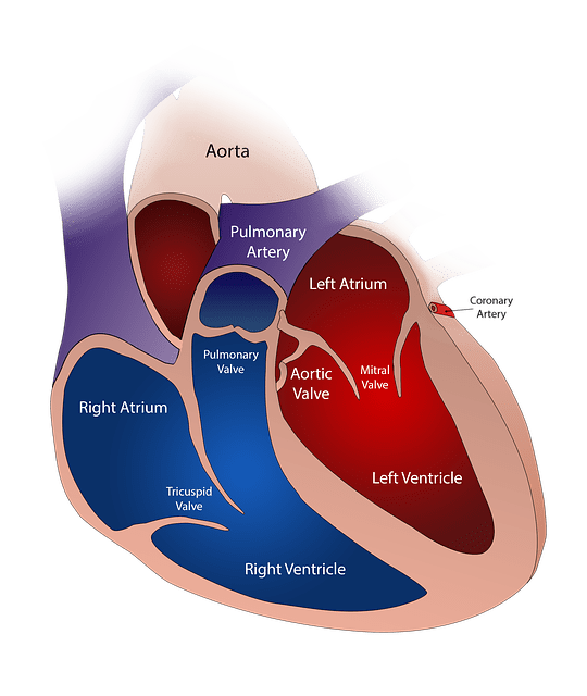 """Kidney failure after heart attack"" is developing top searches in search engines, which means there are more patients who got a severe concern about it. It is called a kidney attack. Generally, the heart and kidney are interconnected. If one organ damage, it will hardly affect another organ. alternative treatment, Anaemia, Asymptomatic Proteinuria, Ayurveda, cancer, cholesterol, chronic illness, COVID-19, Cutaneous infection, diabetes, Diabetic nephropathy, dialysis, diet plan, Dry skin, fitness, Glomerulus, Half Nails, healthy lifestyle, Heart and kidney failure symptoms, heart disease symptoms, Hematuria Syndrome, High blood pressure, How Does Diabetes Cause Kidney Disease, hypertension, Itching, kidney cancer, kidney care, kidney Cyst, kidney disease, kidney disease symptoms, kidney donor, kidney health, Kidney stone, kidney transplant, kidneys, location of kidneys, Lump in your belly, Nephrogenic, nephrology, Non-melanoma skin cancer, oral mucosal, Pigmentary Changes, Pruritus, Purpura, skin conditions, Skin discoloration, Symptoms of Kidneys not Filtering, types of kidney stones, what is a kidney stone, What is kidney stone pain like, Xerosis, heart attack, heart, heart disease, heart health, stroke, diabetes, health, cardiology, cardia car rest, healthy lifestyle, covid, cancer, healthy, blood pressure, cholesterol, heart attack survivor, heart healthy, high blood pressure, hypertension, cardio,"